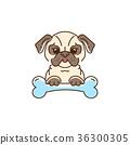 Cartoon pug, Cute Dog with a bone. Bulldog, pug 36300305