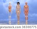 肌肉 肌肉发达 骨架 36300775