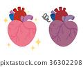心 心脏的 内脏 36302298