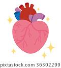 心 心脏的 内脏 36302299
