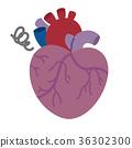 心 心脏的 内脏 36302300