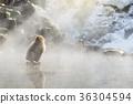 热 地狱谷 猴子 36304594