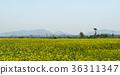 꽃, 꽃밭, 풍경 36311347