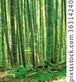竹筍 木 森林 36314240