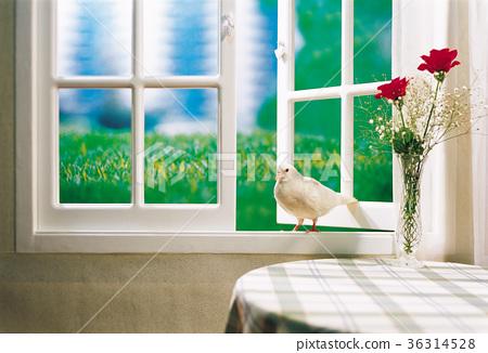 pigeon 36314528