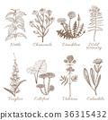 plant, flower, vector 36315432