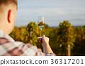 葡萄酒 紅酒 葡萄園 36317201