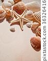 sea shells and star 36326416