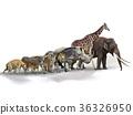 Set of African Animals 36326950