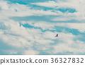 kochi prefecture, bird, birds 36327832