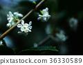 植物 植物學 植物的 36330589