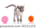 A kitten on a white background. The cat is playing 36331255