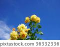 花 花朵 花卉 36332336