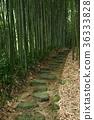 대나무, 대나무 숲, 대밭 36333828
