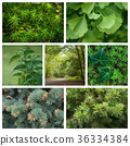 various texture of forest background 36334384