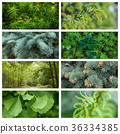 various texture of forest background 36334385