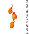 Dried persimmon 36336638