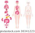 內臟器官骨骼全身變形 36341223