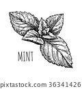 herb, herbal, leaf 36341426