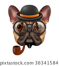 realistic, dog, hipster 36341584