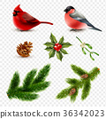 鸟儿 鸟 分支 36342023