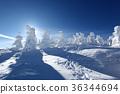 ต้นไม้มีหิมะเกาะ,ภูเขาหิมะ,สกี 36344694
