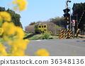 夷隅铁路 油菜花 油菜 36348136