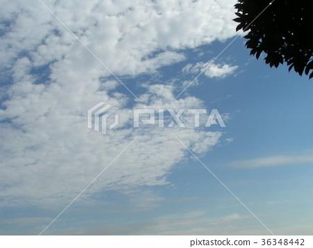 푸른 하늘, 파란 하늘, 청색 36348442