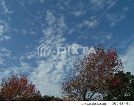 푸른, 가을, 흰 구름 36348446