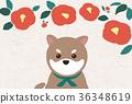 คาเมลเลีย,สุนัข,สุนัช 36348619