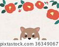 คาเมลเลีย,สุนัข,สุนัช 36349067