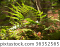잎, 식물, 자연 36352565