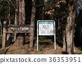公園 森林 樹林 36353951