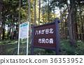 公園 森林 樹林 36353952