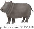 animal, animals, mammal 36355110