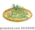 saltwort, vegetables, vegetable 36358490