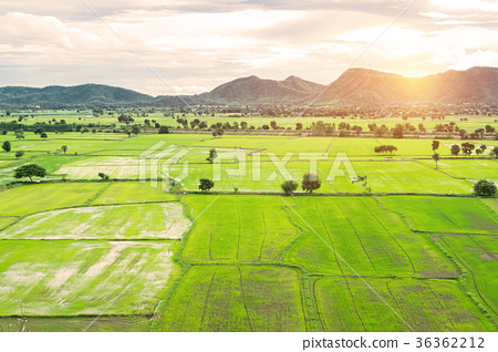 Rice field in Thailand 36362212