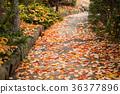 낙엽, 길, 거리 36377896