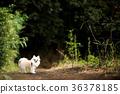 ชีวาวา,สุนัข,สุนัช 36378185