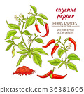cayenne pepper set 36381606