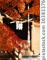 楓樹 紅楓 楓葉 36383376