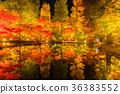 櫪木公園的雄偉看法秋天葉子反射 36383552