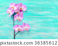 fresh rose orchid flowers the turquoise vintage 36385612