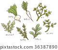seven herbs, shepherd's purse, turnip 36387890