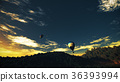 Hot Air Balloons Lush Natural Wilderness Jungle 36393994