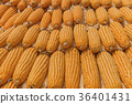 Sweet Corn of Agricultural products in farm 36401431