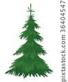 Christmas fir tree 36404547