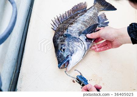 Chinos Fishing 36405025