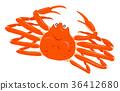 雪螃蟹白色背景 36412680