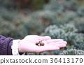 เบอร์รี่,ลูกโอ๊ก,สวน 36413179